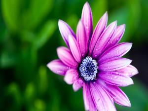 Flor con pétalos de color violeta