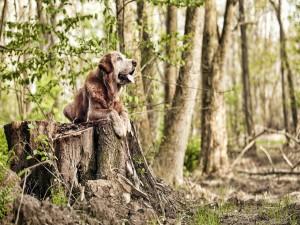 Perro descansando sobre un tronco