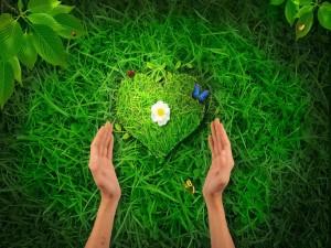 El corazón de la naturaleza