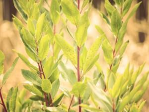Hojas verdes en las ramas de un arbusto