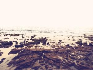 Piedras y rocas en una orilla