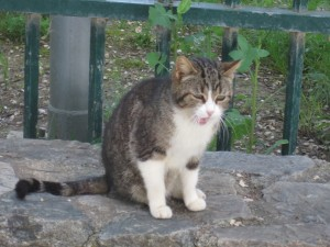 Un gato maullando