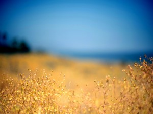 Plantas bajo un cielo azul