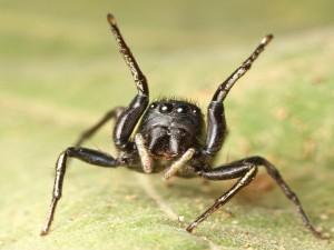 Araña sobre una hoja
