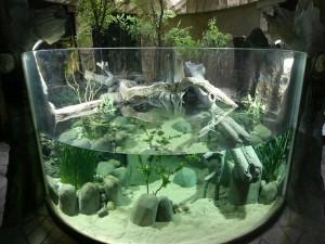 Original acuario circular