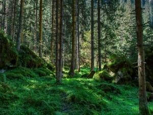 Un bonito bosque verde