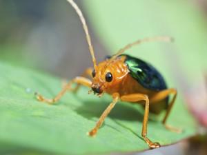 Un bonito escarabajo