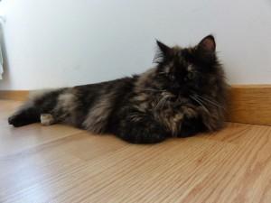 Bonito gato tumbado en el suelo