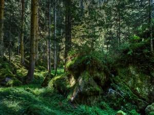 Rocas cubiertas de vegetación en el bosque