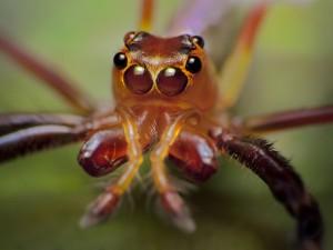 La cabeza de una araña