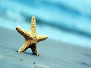 Estrella de mar clavada en la arena