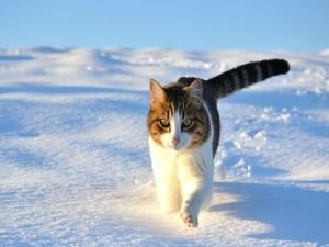 Gato corriendo sobre la nieve