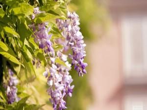 Flores colgando de una planta