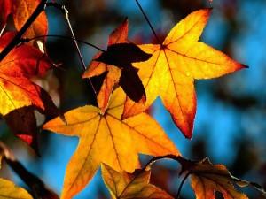 Hojas marrones en las ramas