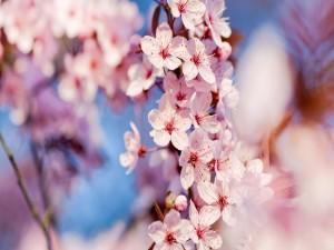 Ramas cubiertas de bellas flores