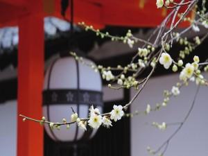 Pequeñas flores blancas en las ramas de un árbol frutal