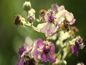 Flores en sus distintas fases
