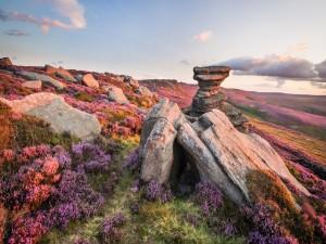 Flores púrpura en la montaña rocosa