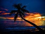 Palmera inclinada sobre la playa