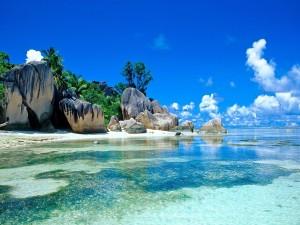 Rocas y palmeras junto a una playa
