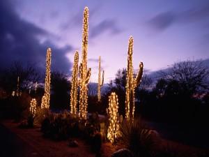 Cactus iluminados a la entrada del sol