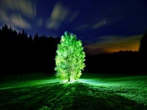 Árbol brillando intensamente al anochecer