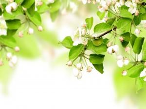 Flores cerradas en las ramas