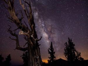 Árbol seco bajo la Vía Láctea