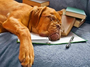 Bulldog dormido tras pasar la noche estudiando