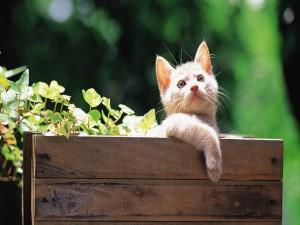 Un gatito dentro de un cajón de madera