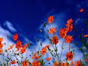 Flores naranjas bajo un cielo azul