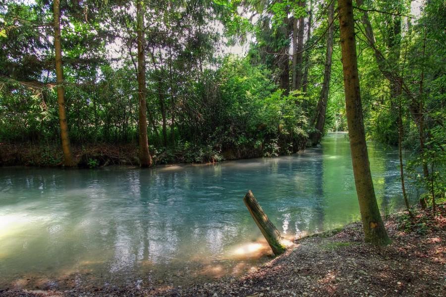 Río en un bosque