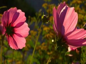 Flores de color rosa bajo la luz del sol