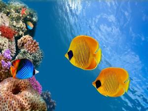 Hermosos peces de colores bajo el mar