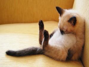 Un gato dormido en una postura divertida
