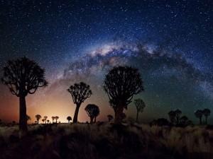 Vía Láctea sobre el Bosque Quivertree (Namibia)