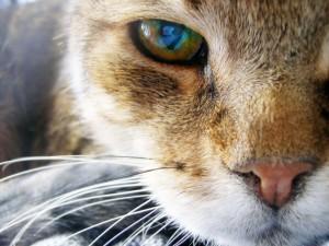 Media cara de un gato