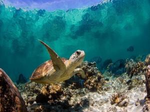 Tortuga y peces bajo el mar