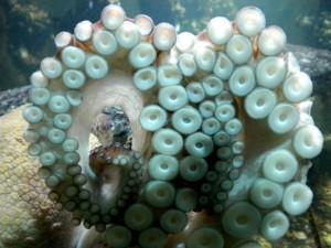 Los tentáculos de un pulpo