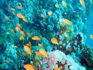 Peces nadando junto a un arrecife