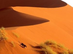 Leopardo en el Parque Nacional de Namib-Naukluft (Namibia)