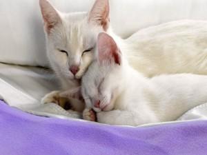 Gata blanca junto a su gatito