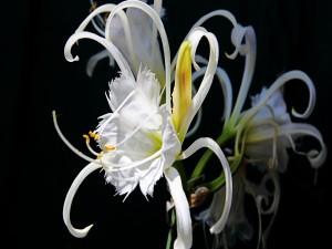 Flor de finos pétalos