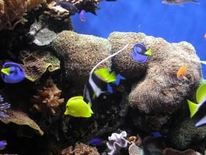 Peces tropicales bajo el mar