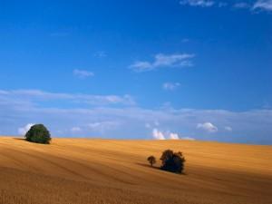 Campo bajo un cielo azul