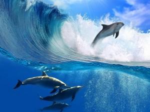 Delfines en el mar