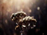 Flores iluminadas por el sol