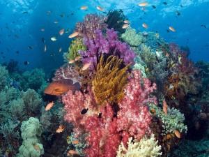 Peces nadando en un arrecife