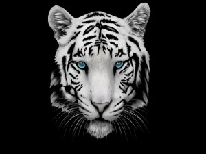 Cabeza de tigre blanco