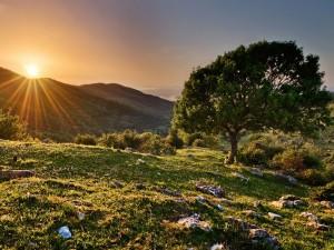 Rayos de sol iluminando el campo